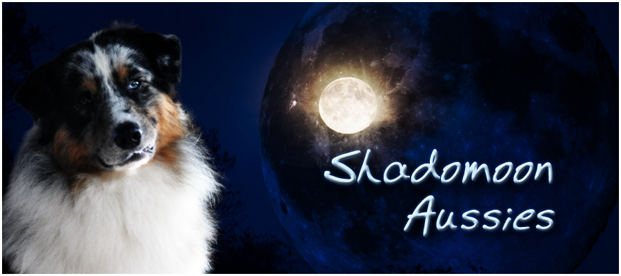 Shadomoon Aussies
